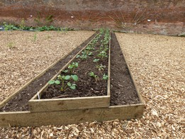 The strawberry bed completed and planted