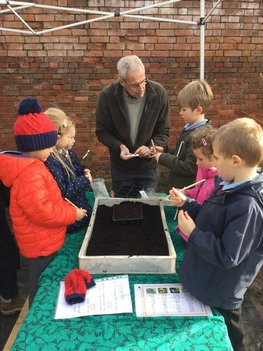 Year 1 Emscote Infant School planting beans