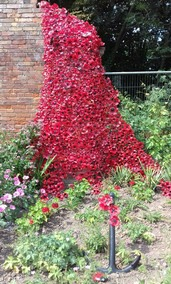 Our Commemorative WW1 Weeping Wall of Poppies