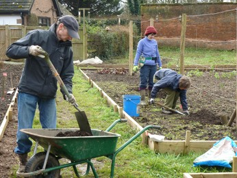 Planting new fruit trees