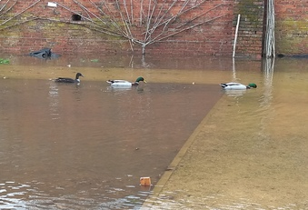Some of our visitors thought the flooding was great