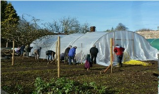 Covering the hoops over the melon house with the polytunnel material